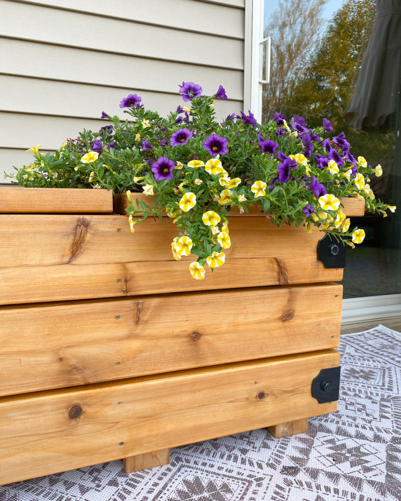 Closeup of Bench Planter with New Oil on it and Flowers in it